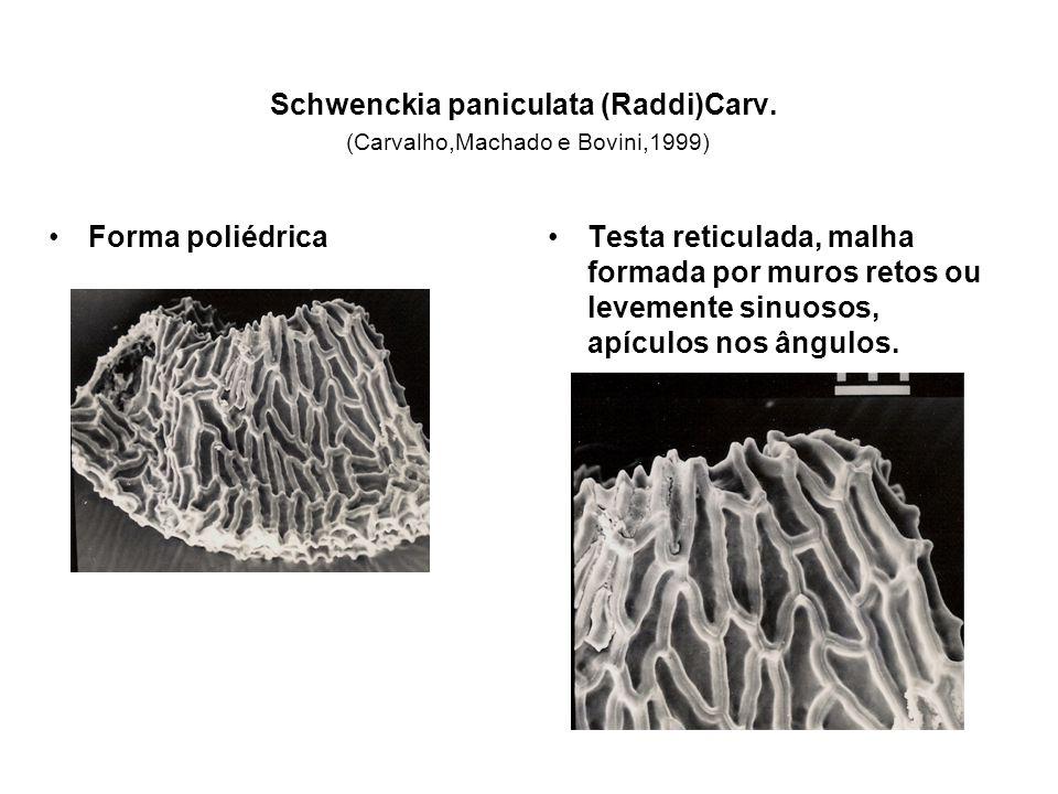 Schwenckia paniculata (Raddi)Carv. (Carvalho,Machado e Bovini,1999) Forma poliédricaTesta reticulada, malha formada por muros retos ou levemente sinuo