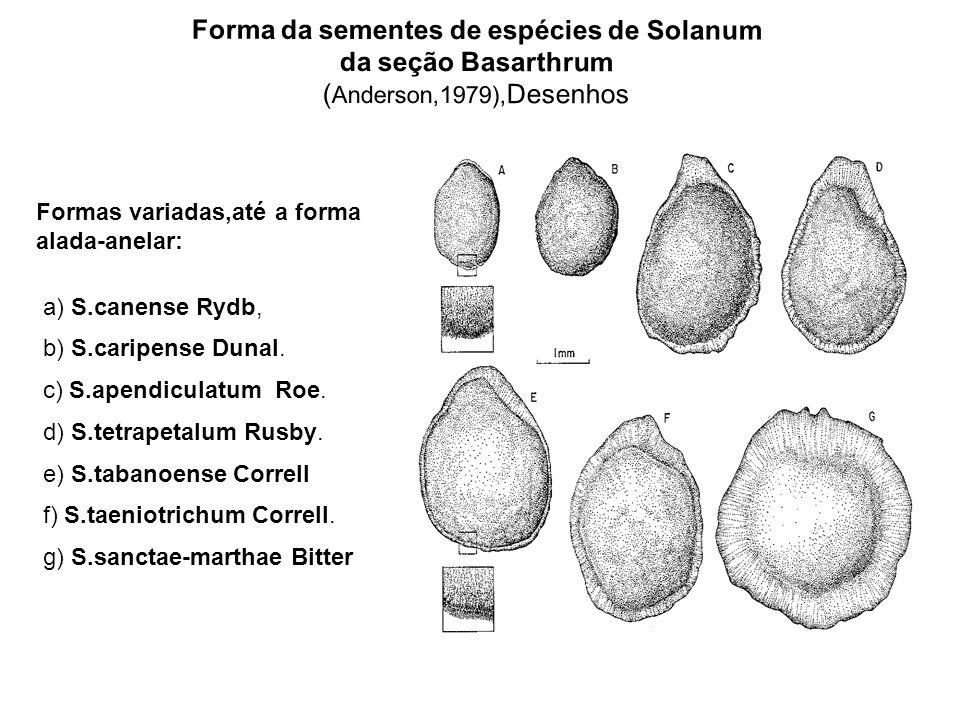 Forma da sementes de espécies de Solanum da seção Basarthrum ( Anderson,1979), Desenhos Formas variadas,até a forma alada-anelar: a) S.canense Rydb, b) S.caripense Dunal.
