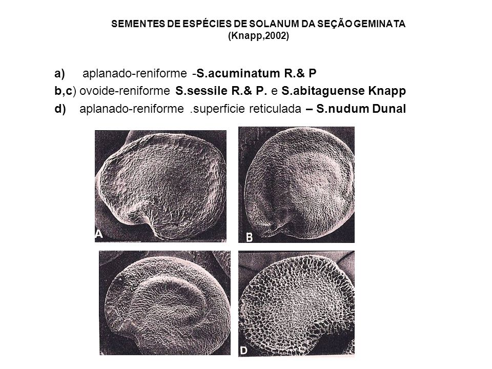 SEMENTES DE ESPÉCIES DE SOLANUM DA SEÇÃO GEMINATA (Knapp,2002) a) aplanado-reniforme -S.acuminatum R.& P b,c) ovoide-reniforme S.sessile R.& P.