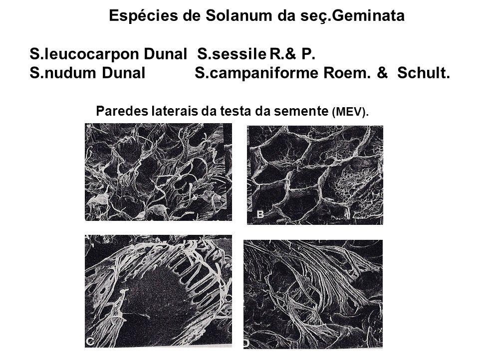 Espécies de Solanum da seç.Geminata S.leucocarpon Dunal S.sessile R.& P. S.nudum Dunal S.campaniforme Roem. & Schult. Paredes laterais da testa da sem