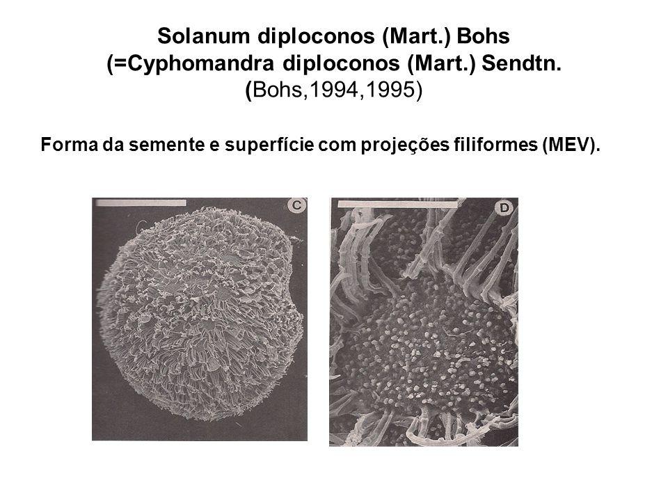 Solanum diploconos (Mart.) Bohs (=Cyphomandra diploconos (Mart.) Sendtn. (Bohs,1994,1995) Forma da semente e superfície com projeções filiformes (MEV)