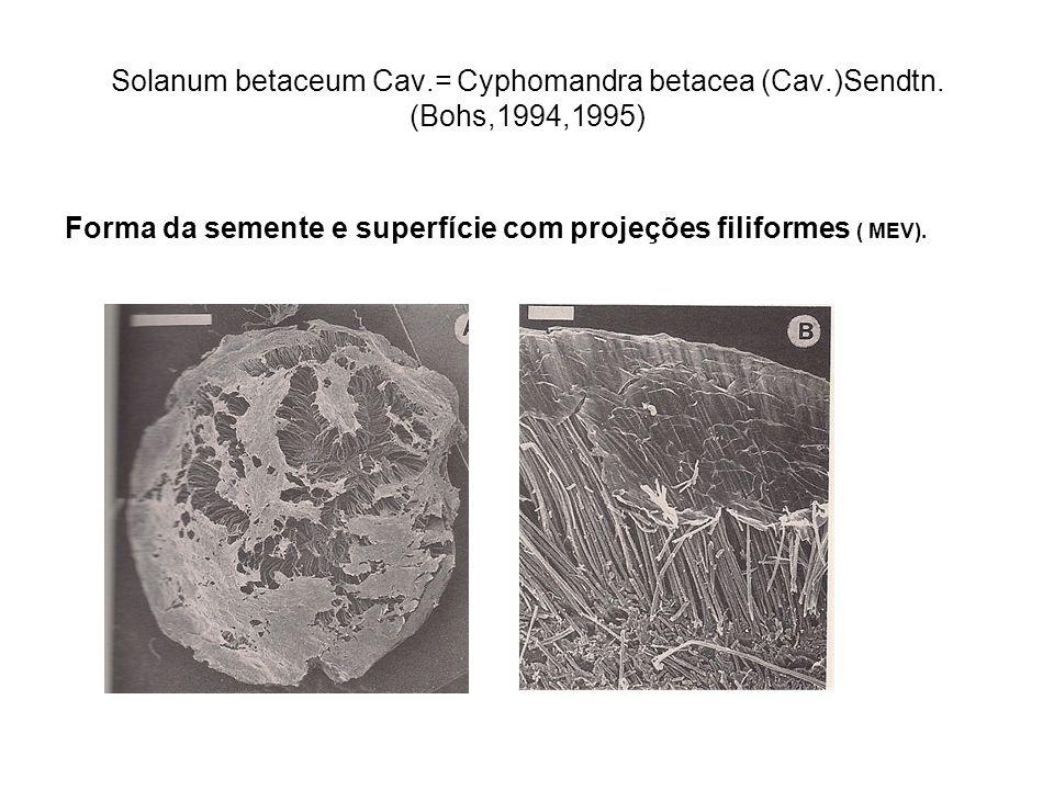 Solanum betaceum Cav.= Cyphomandra betacea (Cav.)Sendtn. (Bohs,1994,1995) Forma da semente e superfície com projeções filiformes ( MEV).