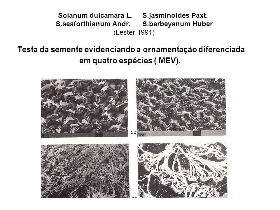 Solanum dulcamara L. S.jasminoides Paxt. S.seaforthianum Andr. S.barbeyanum Huber (Lester,1991) Testa da semente evidenciando a ornamentação diferenci
