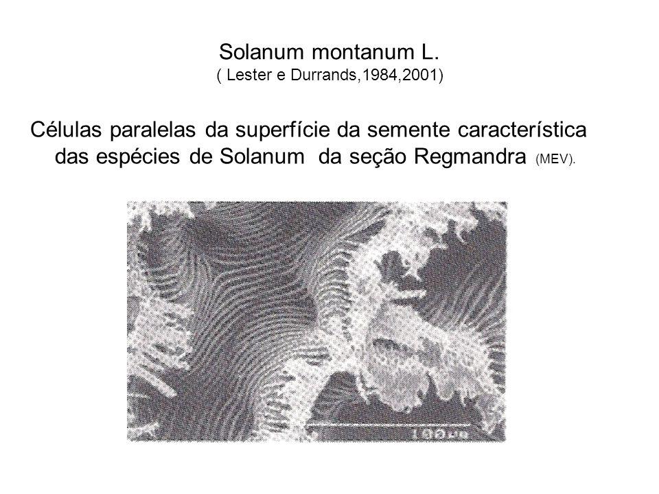 Solanum montanum L. ( Lester e Durrands,1984,2001) Células paralelas da superfície da semente característica das espécies de Solanum da seção Regmandr