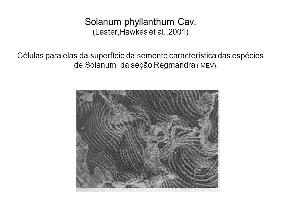 Solanum phyllanthum Cav. (Lester,Hawkes et al.,2001) Células paralelas da superfície da semente característica das espécies de Solanum da seção Regman