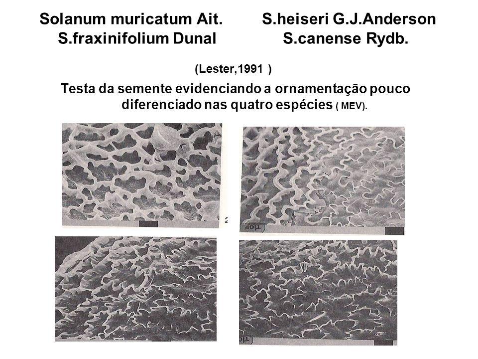 Solanum muricatum Ait. S.heiseri G.J.Anderson S.fraxinifolium Dunal S.canense Rydb. (Lester,1991 ) Testa da semente evidenciando a ornamentação pouco