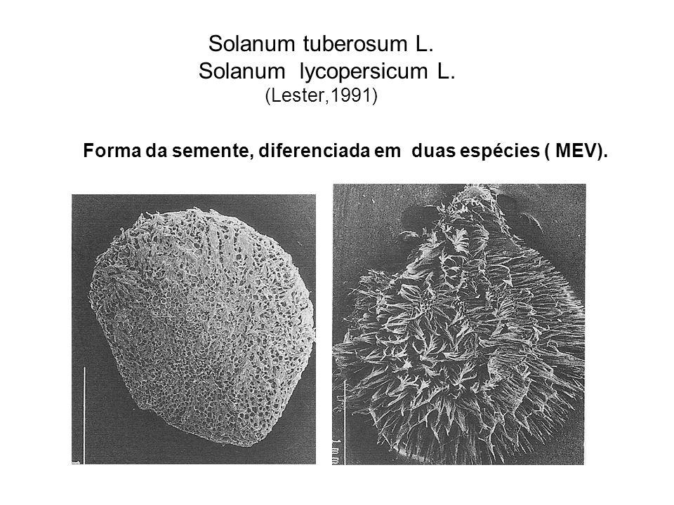 Solanum tuberosum L.Solanum lycopersicum L.