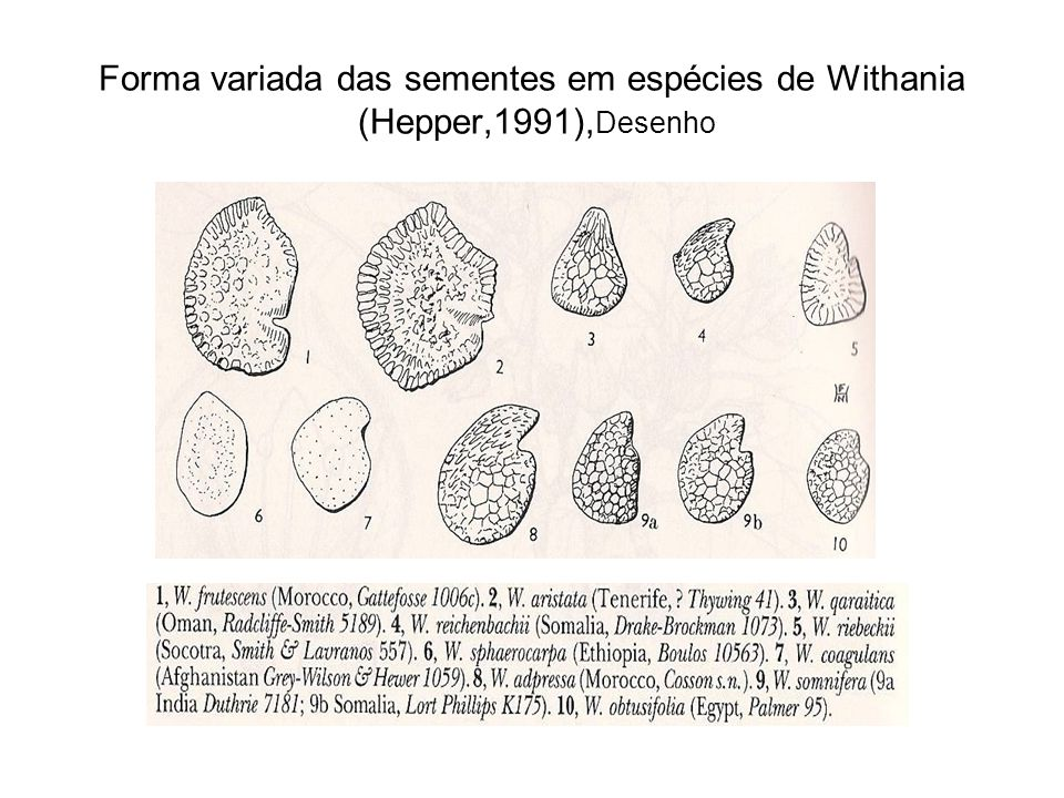 Forma variada das sementes em espécies de Withania (Hepper,1991), Desenho