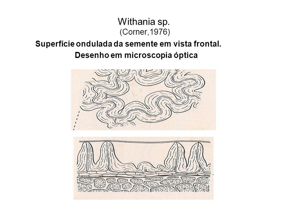 Withania sp. (Corner,1976) Superfície ondulada da semente em vista frontal. Desenho em microscopia óptica