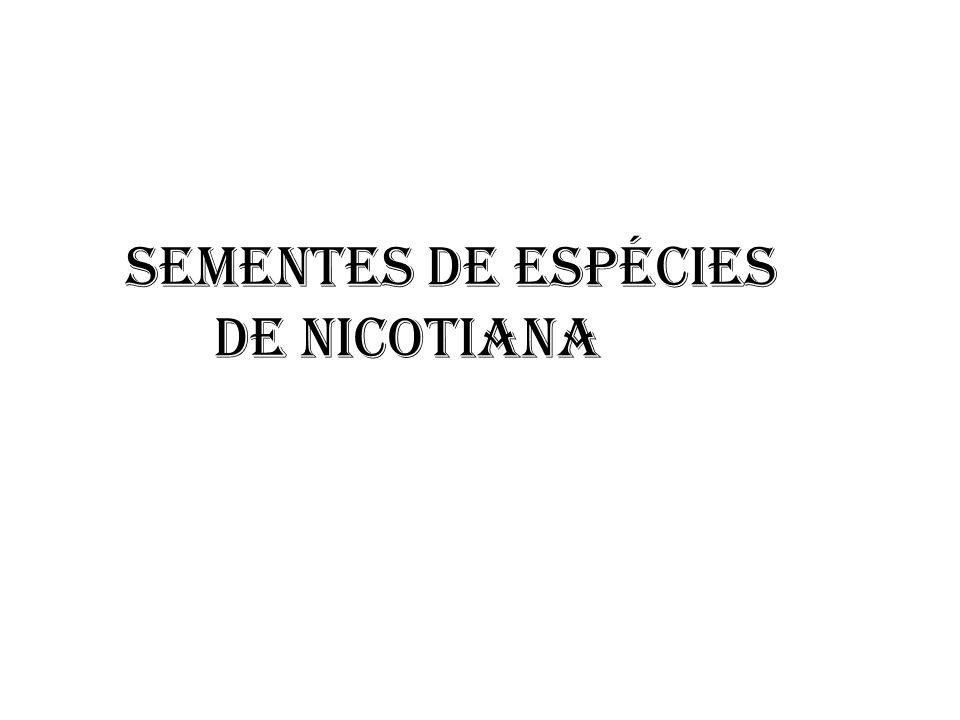 SEMENTES DE ESPÉCIES DE NICOTIANA