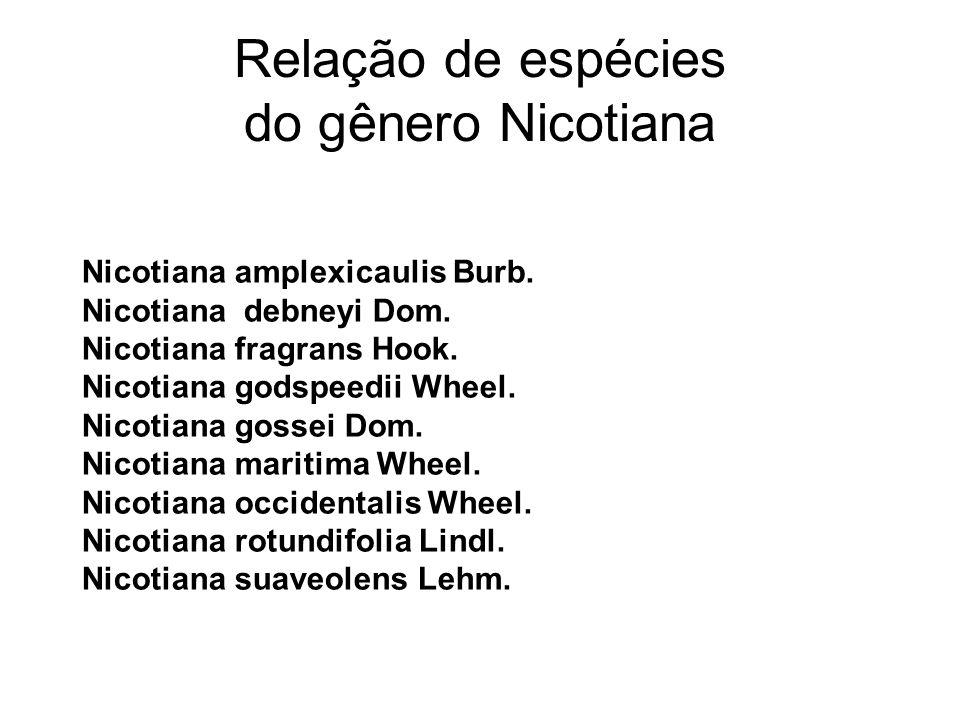 Relação de espécies do gênero Nicotiana Nicotiana amplexicaulis Burb. Nicotiana debneyi Dom. Nicotiana fragrans Hook. Nicotiana godspeedii Wheel. Nico