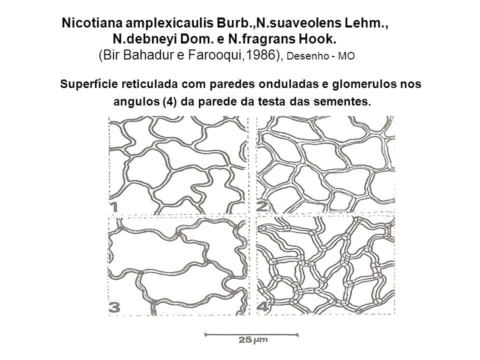 Nicotiana goodspeedii Wheel.,N.occidentalis Wheel., N.gossei Dom., N.maritima Wheel.e N.rotundifolia Lindl.