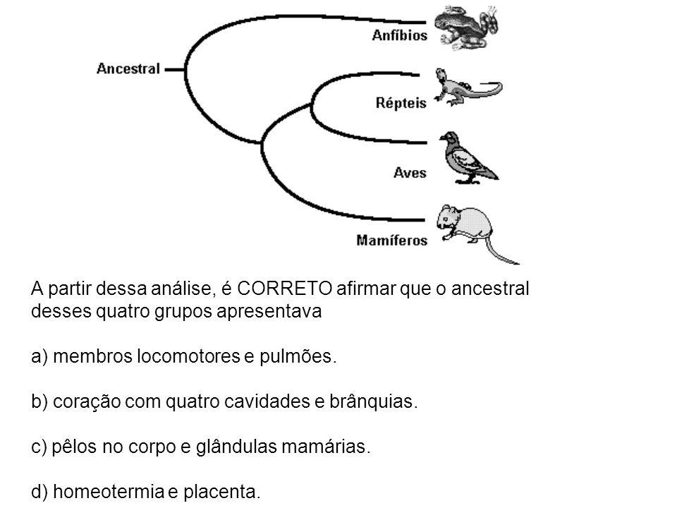 A partir dessa análise, é CORRETO afirmar que o ancestral desses quatro grupos apresentava a) membros locomotores e pulmões. b) coração com quatro cav