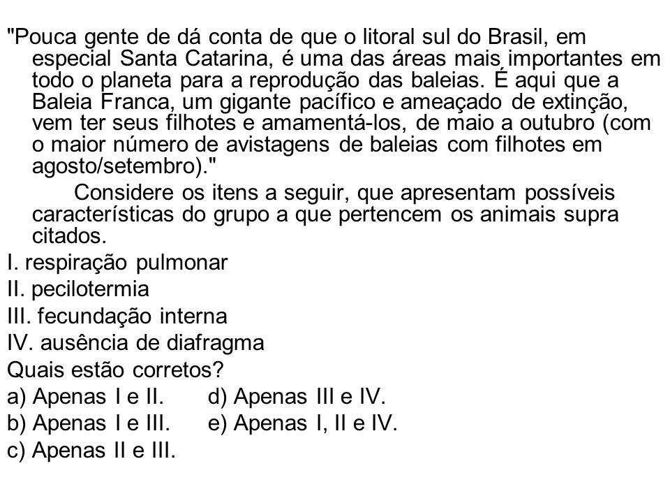 Pouca gente de dá conta de que o litoral sul do Brasil, em especial Santa Catarina, é uma das áreas mais importantes em todo o planeta para a reprodução das baleias.