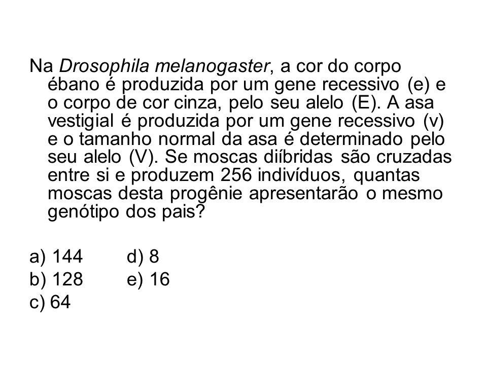 Na Drosophila melanogaster, a cor do corpo ébano é produzida por um gene recessivo (e) e o corpo de cor cinza, pelo seu alelo (E). A asa vestigial é p