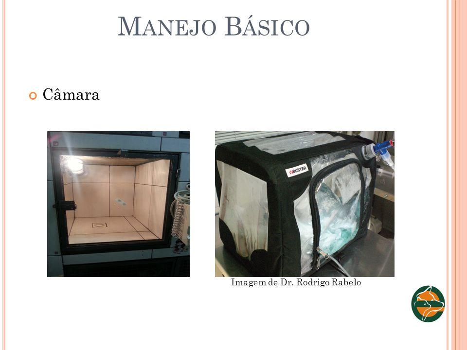 M ANEJO B ÁSICO Câmara Imagem de Dr. Rodrigo Rabelo