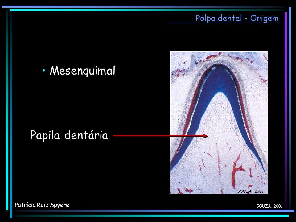SOUZA, 2001 Mesenquimal Papila dentária Polpa dental - Origem SOUZA, 2001 Patrícia Ruiz Spyere