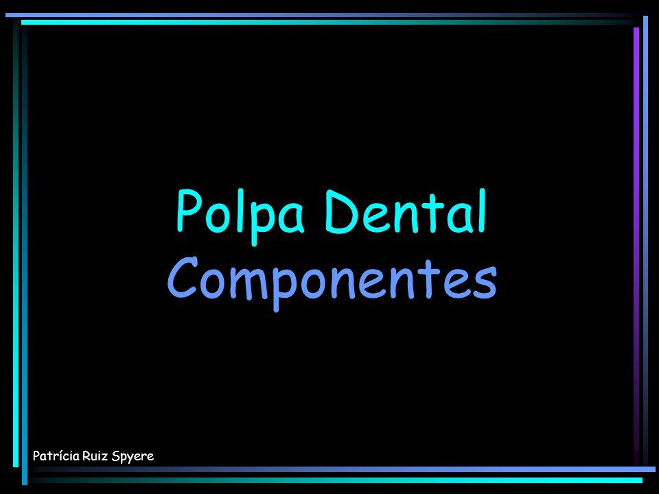 Polpa Dental Componentes Patrícia Ruiz Spyere