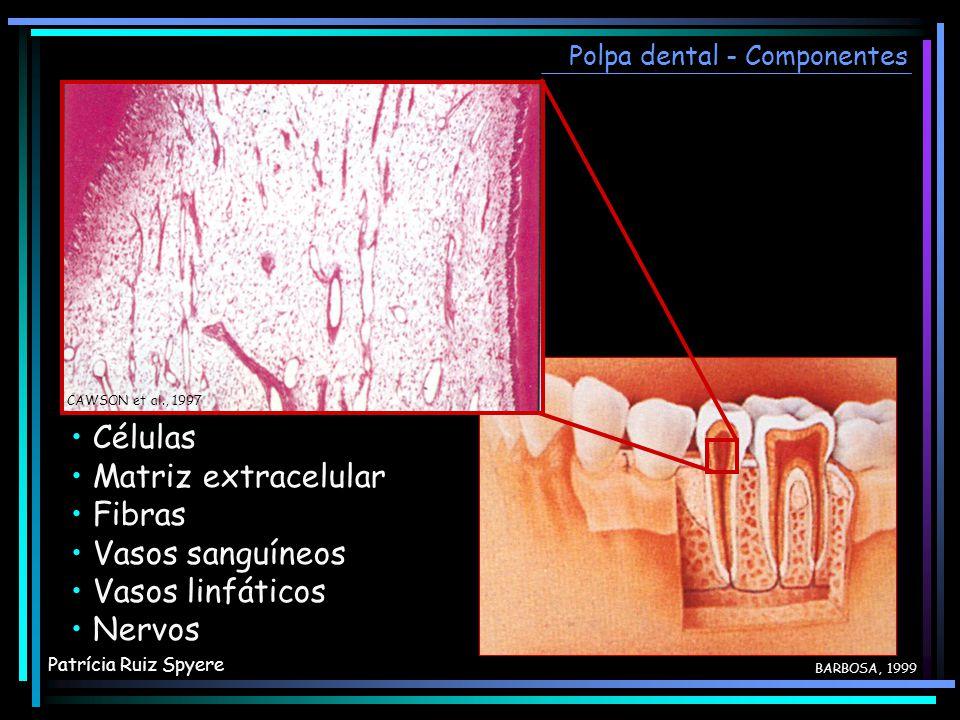 Polpa dental - Componentes Células Matriz extracelular Fibras Vasos sanguíneos Vasos linfáticos Nervos Células Matriz extracelular Fibras Vasos sanguí