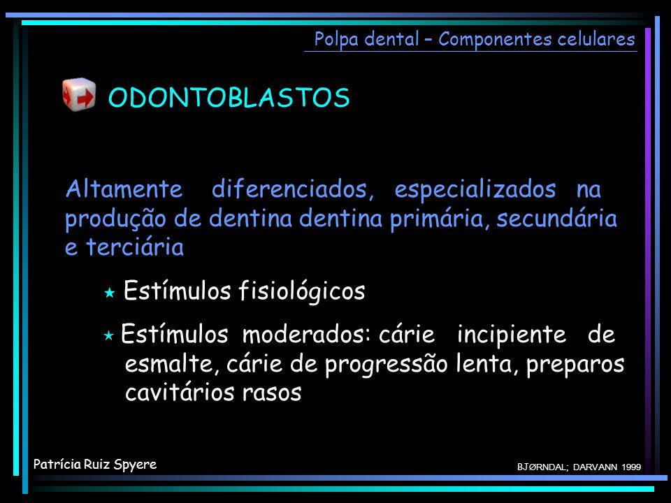 ODONTOBLASTOS Polpa dental – Componentes celulares Altamente diferenciados, especializados na produção de dentina dentina primária, secundária e terci
