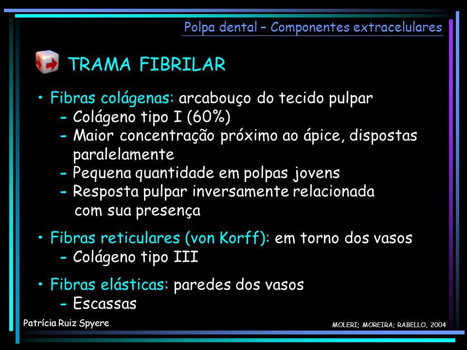 Fibras colágenas: arcabouço do tecido pulpar - Colágeno tipo I (60%) - Maior concentração próximo ao ápice, dispostas paralelamente - Pequena quantida