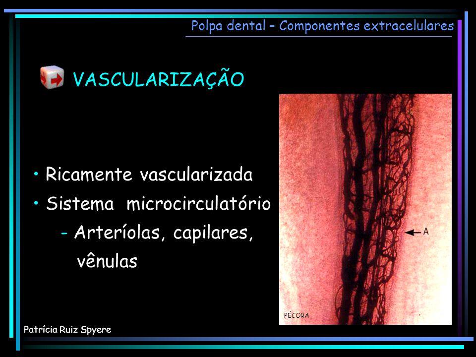 Ricamente vascularizada Sistema microcirculatório - Arteríolas, capilares, vênulas Ricamente vascularizada Sistema microcirculatório - Arteríolas, cap