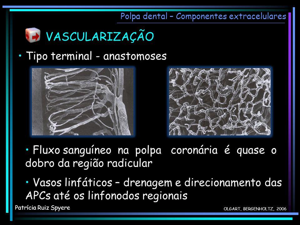 Tipo terminal - anastomoses VASCULARIZAÇÃO Polpa dental – Componentes extracelulares Fluxo sanguíneo na polpa coronária é quase o dobro da região radi