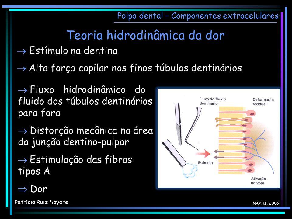 Teoria hidrodinâmica da dor Polpa dental – Componentes extracelulares NÄRHI, 2006 Estímulo na dentina Alta força capilar nos finos túbulos dentinários