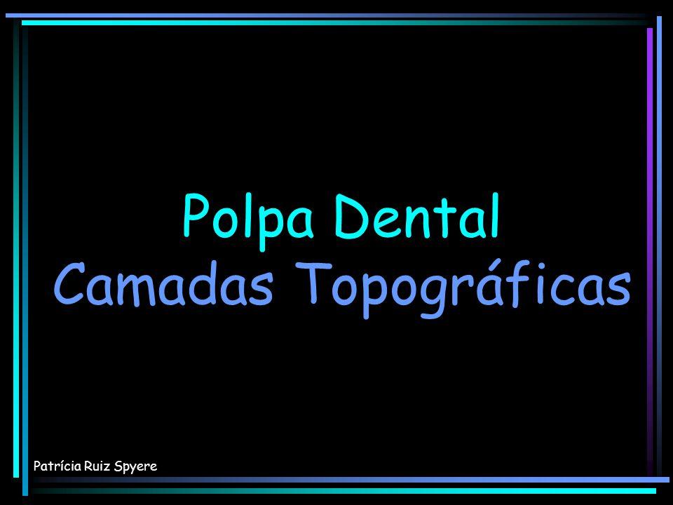 Polpa Dental Camadas Topográficas Polpa Dental Camadas Topográficas Patrícia Ruiz Spyere