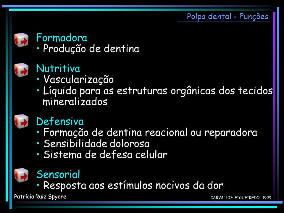 Formadora Produção de dentina Nutritiva Vascularização Líquido para as estruturas orgânicas dos tecidos mineralizados Defensiva Formação de dentina re