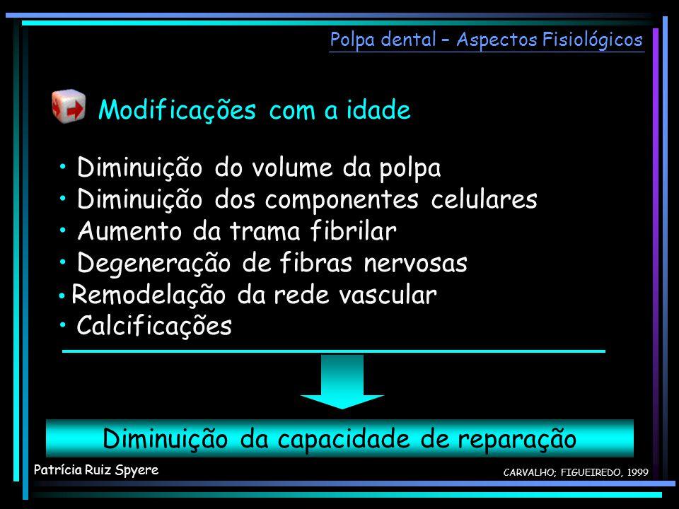 Diminuição do volume da polpa Diminuição dos componentes celulares Aumento da trama fibrilar Degeneração de fibras nervosas Remodelação da rede vascul