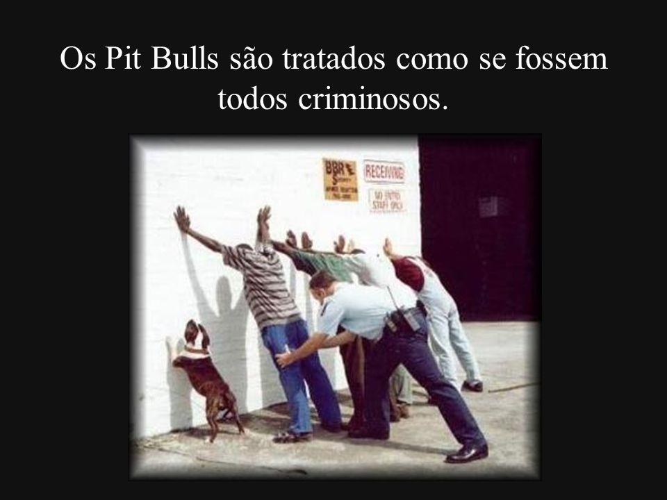 Os Pit Bulls são tratados como se fossem todos criminosos.