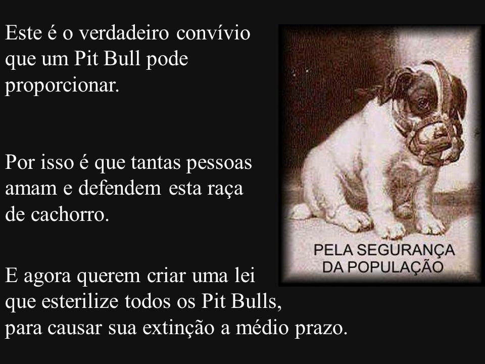 Este é o verdadeiro convívio que um Pit Bull pode proporcionar. Por isso é que tantas pessoas amam e defendem esta raça de cachorro. E agora querem cr