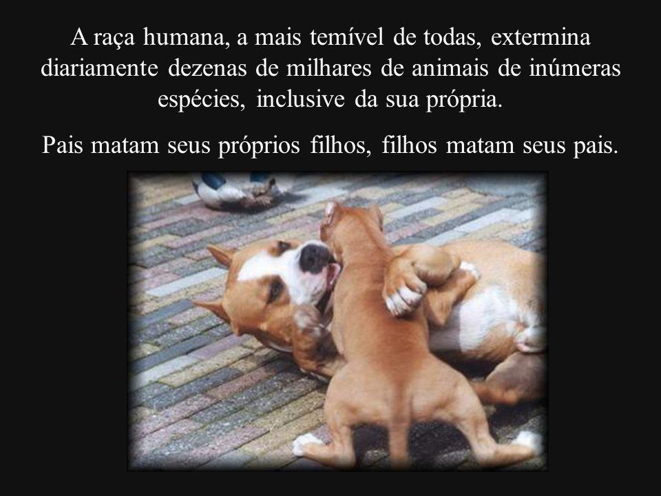 A raça humana, a mais temível de todas, extermina diariamente dezenas de milhares de animais de inúmeras espécies, inclusive da sua própria. Pais mata
