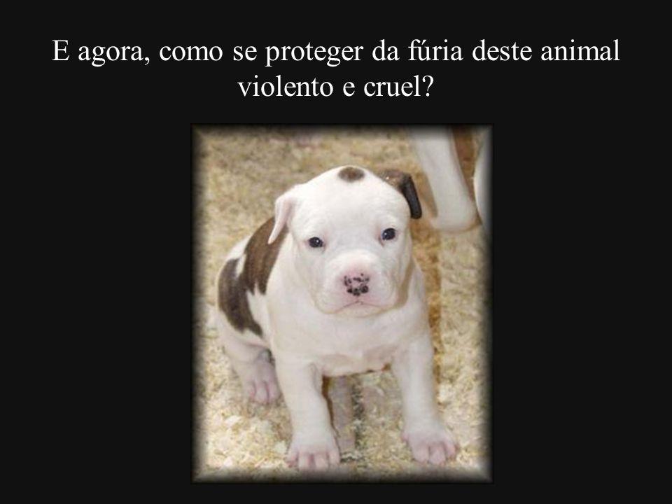 E agora, como se proteger da fúria deste animal violento e cruel?