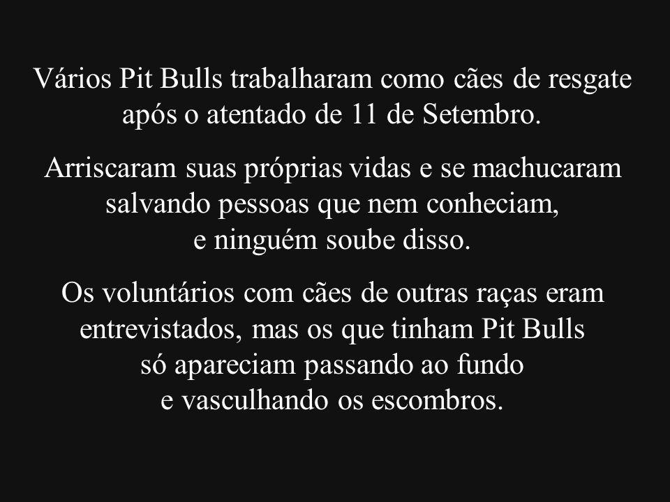 Vários Pit Bulls trabalharam como cães de resgate após o atentado de 11 de Setembro. Arriscaram suas próprias vidas e se machucaram salvando pessoas q