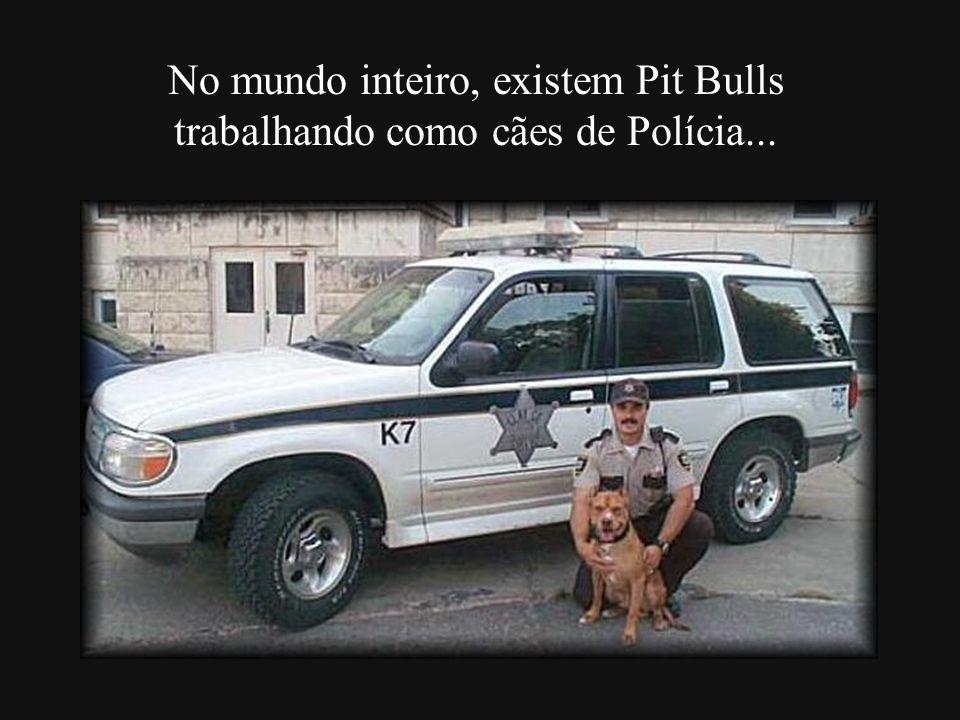 ...Pit Bulls que fazem terapia com crianças, idosos e doentes em hospitais e abrigos...