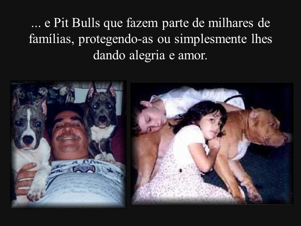 ... e Pit Bulls que fazem parte de milhares de famílias, protegendo-as ou simplesmente lhes dando alegria e amor.