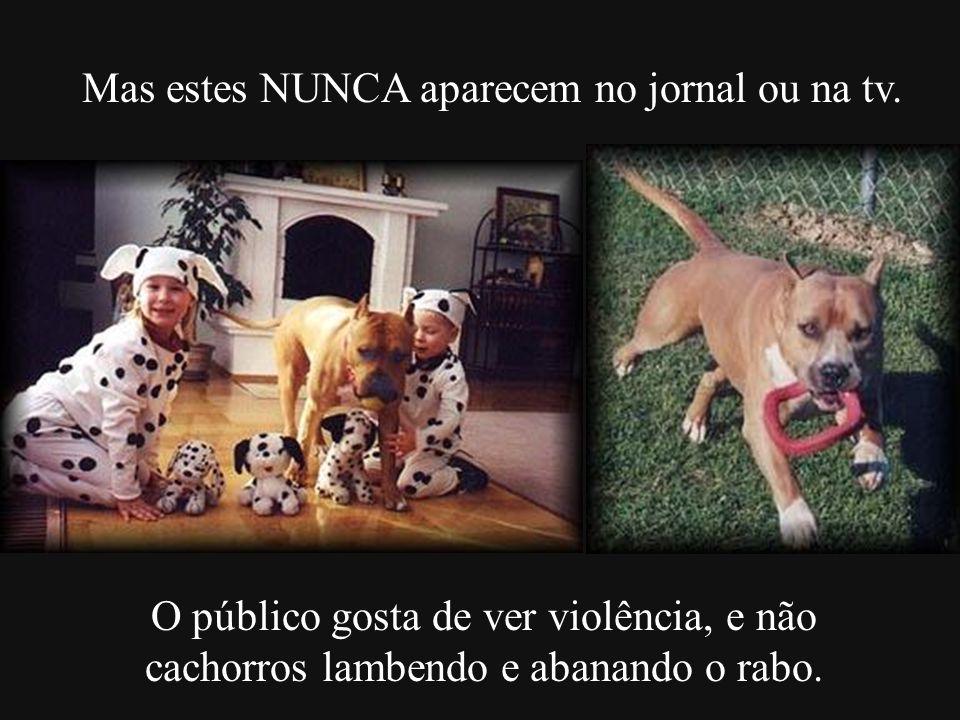Mas estes NUNCA aparecem no jornal ou na tv. O público gosta de ver violência, e não cachorros lambendo e abanando o rabo.