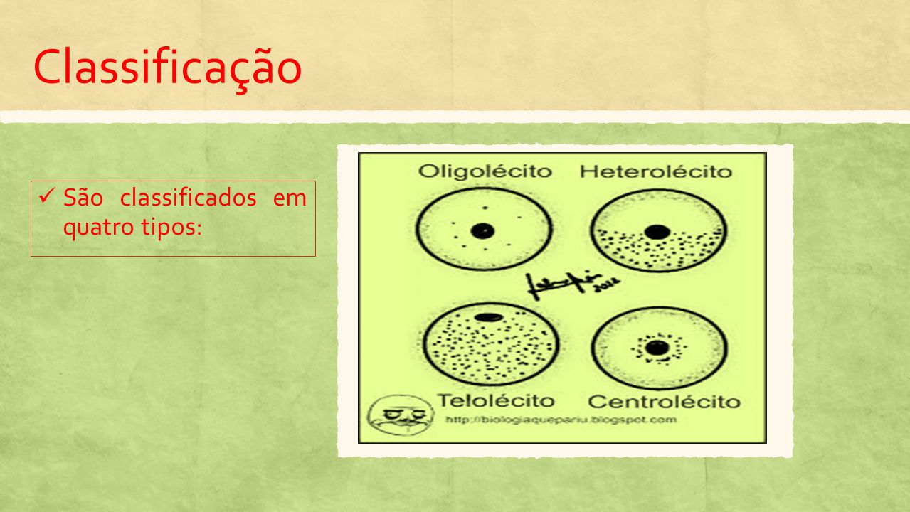 Ovo Oligolécito ou Isolécito Muito pobre em vitelo.