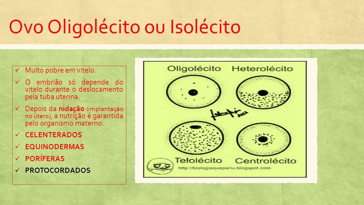 Ovo Heterolécito ou Mediolécito Maior quantidade de vitelo.