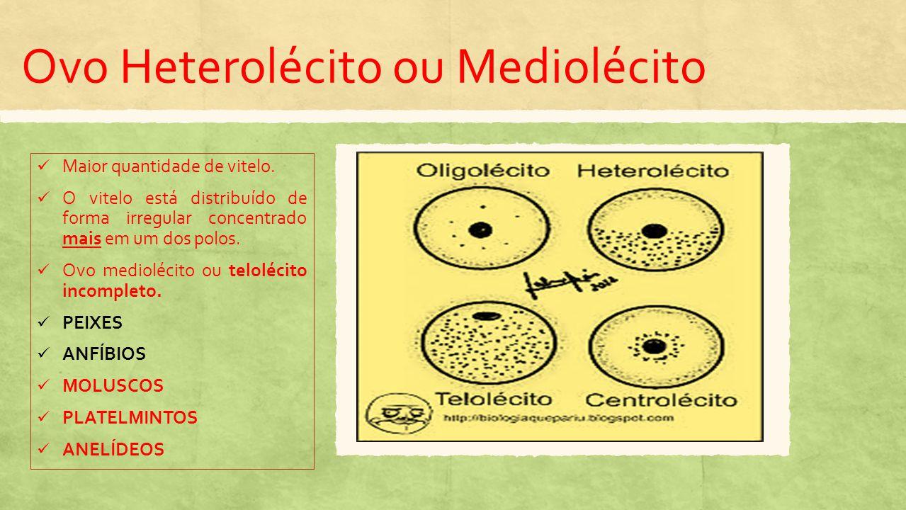 Ovo Megalécito ou Telolécito Completo Ovo repleto de vitelo, exceto o polo onde está o núcleo.