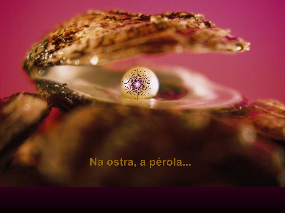 No fruto, a semente...