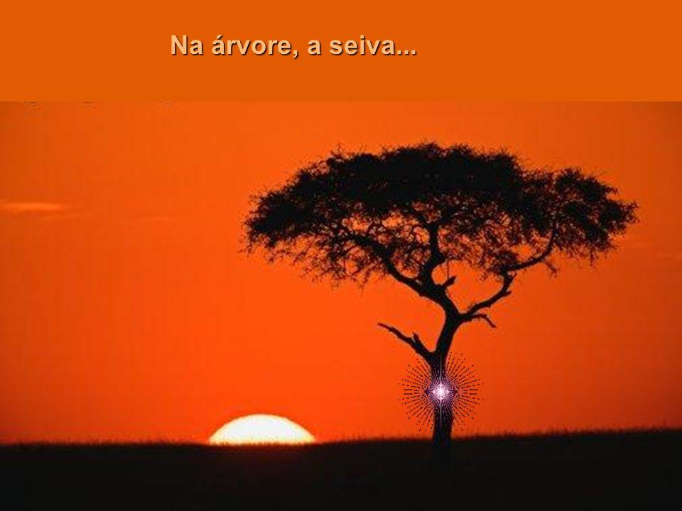 Na árvore, a seiva...