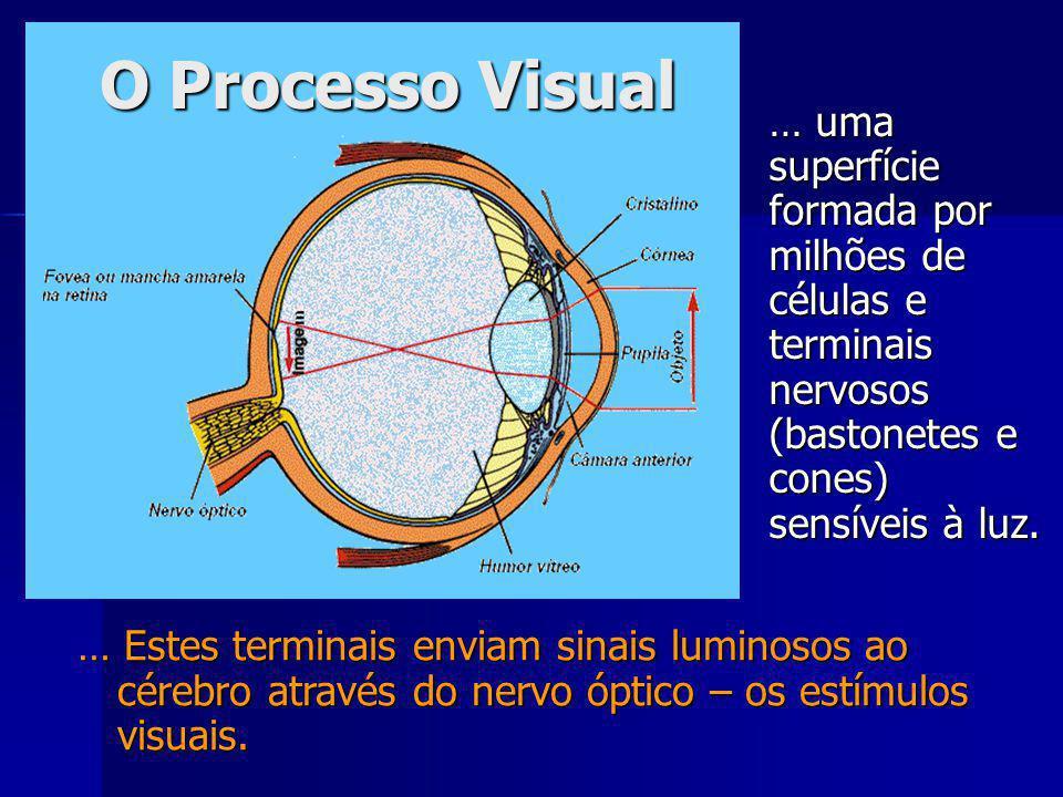 … Estes terminais enviam sinais luminosos ao cérebro através do nervo óptico – os estímulos visuais.