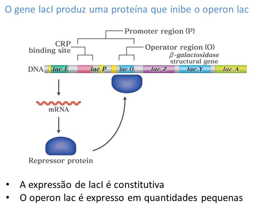 O gene lacI produz uma proteína que inibe o operon lac A expressão de lacI é constitutiva O operon lac é expresso em quantidades pequenas