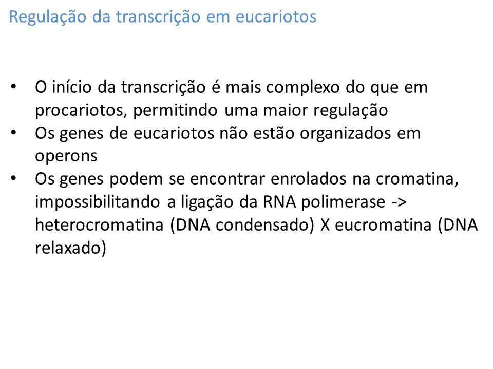 Regulação da transcrição em eucariotos O início da transcrição é mais complexo do que em procariotos, permitindo uma maior regulação Os genes de eucar