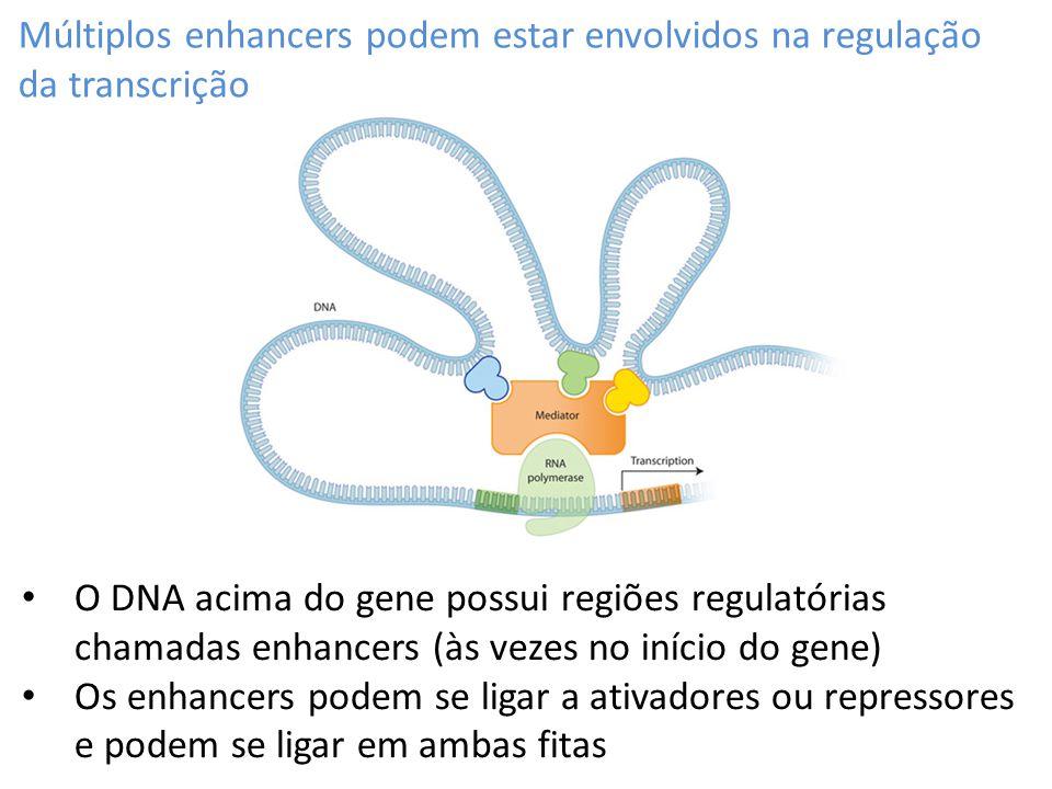 Múltiplos enhancers podem estar envolvidos na regulação da transcrição O DNA acima do gene possui regiões regulatórias chamadas enhancers (às vezes no