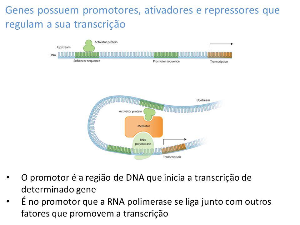 Genes possuem promotores, ativadores e repressores que regulam a sua transcrição O promotor é a região de DNA que inicia a transcrição de determinado