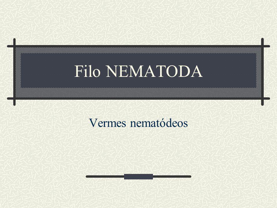 Variação da cápsula bucal em Nematoda